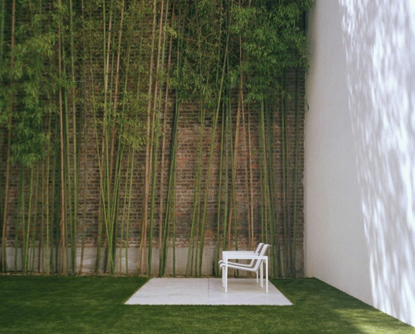 bambus-garten-mit-einem-sehr-hohen-zaun