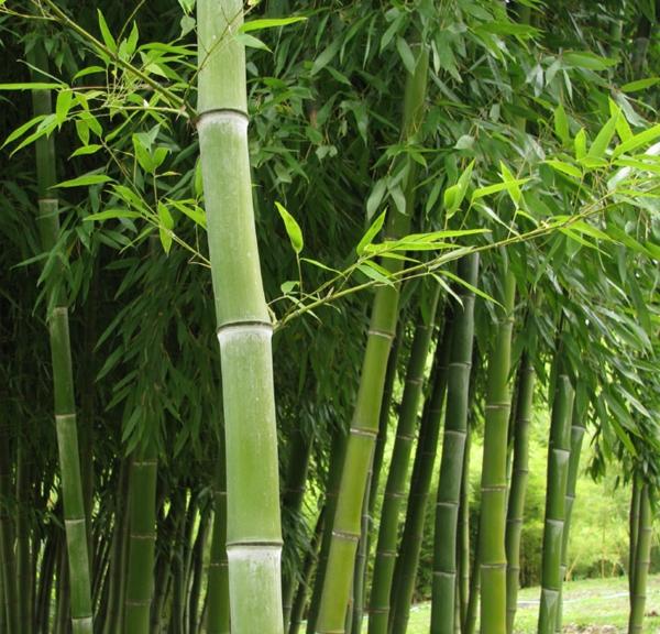 bambus-garten-sehr-schön-und-inspirierend