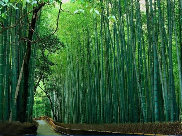 bambus-garten-wunderschönes-und-inspirierendes-foto