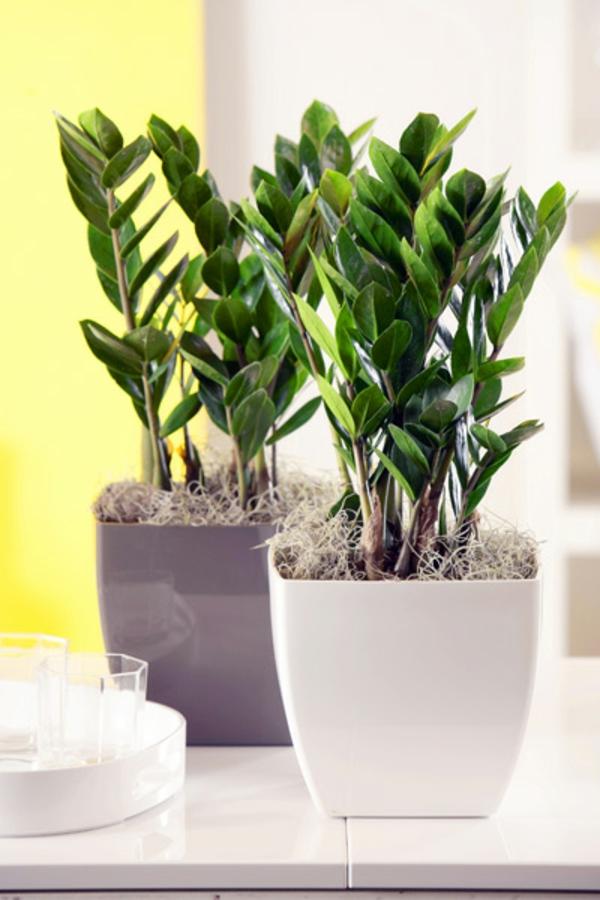 Zimmerpflanzen f r das perfekte ambiente im haus for Originelle zimmerpflanzen