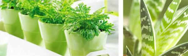 pflanzen-für-indoor