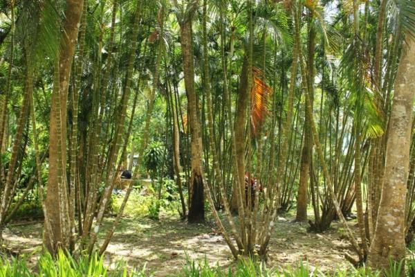 einmaliger-bambus-garten