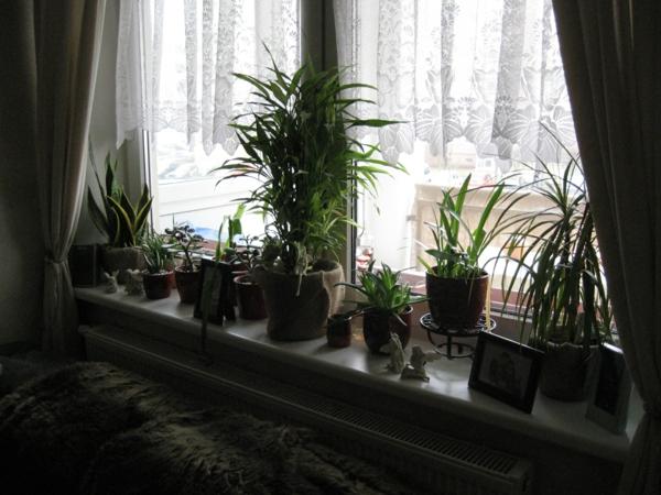 erfüllen-das-fenster-artenreiche-pflanzen