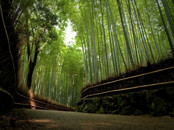 herrliches-foto-vom-bambus-garten
