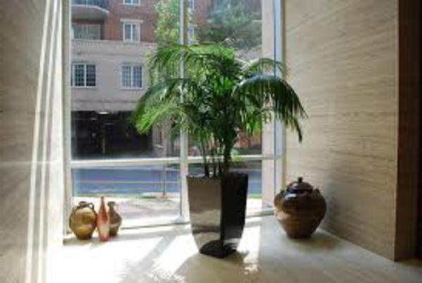 pflanze-am-fenster-licht