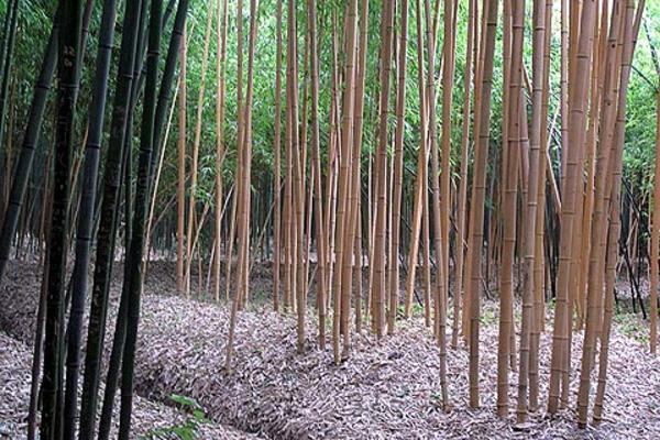 interessant-wirkender-bambus-garten