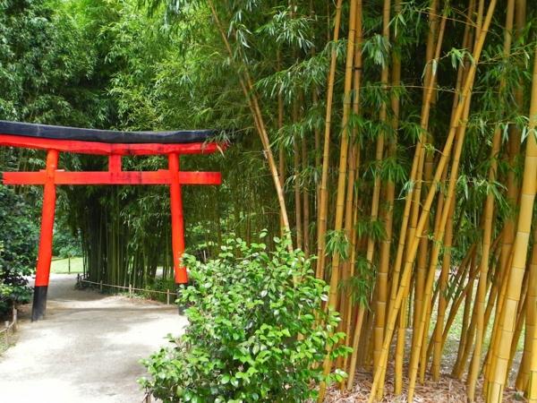 interessanter-schöner-bambus-garten