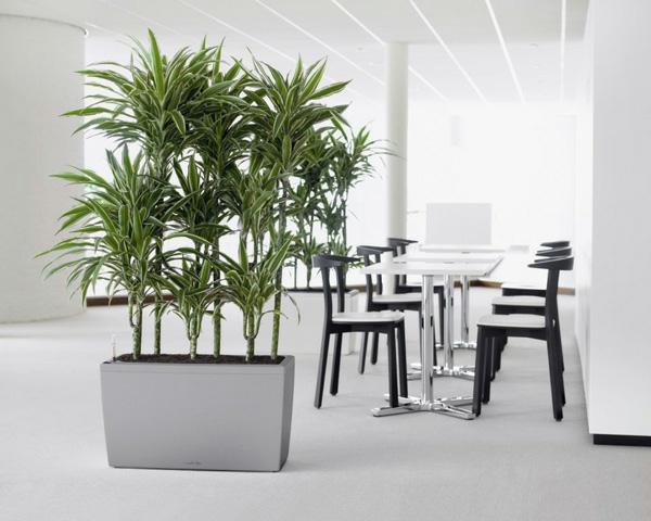 büro-zimmer-pflanzen