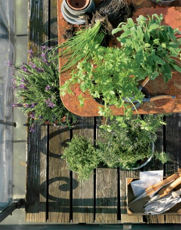 Der eigene kräutergarten auf balkon   archzine.net