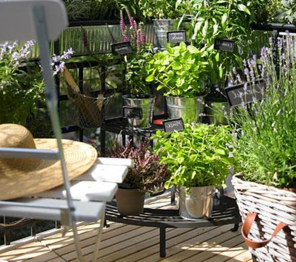 kräutergarten-auf-balkon-bereich