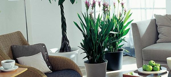 Zimmerpflanzen f r das perfekte ambiente im haus for Zimmerpflanzen wohnzimmer