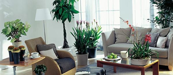 farbenfrohe-blühende-pflanzen