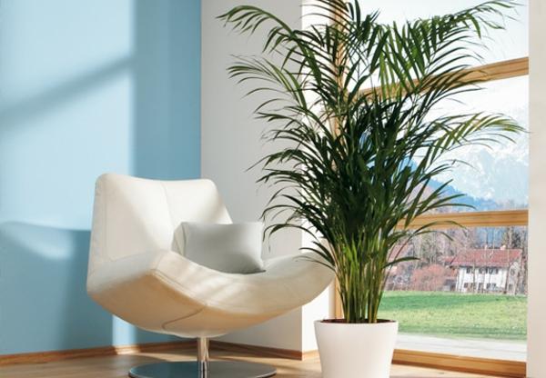 kentia-palme-howeia-botanisch
