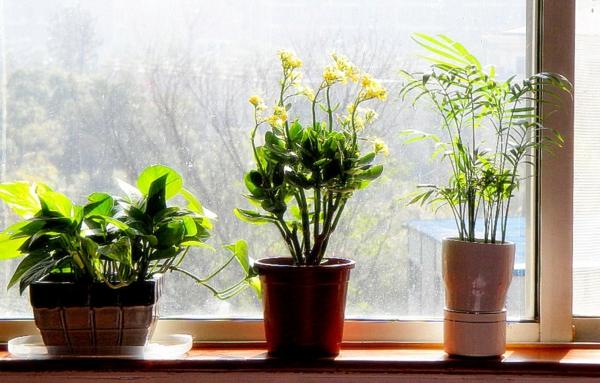 pflanzen-im-schlafzimmer-am-fenster