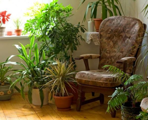 raum-erfüllt-mit-pflanzen-leben