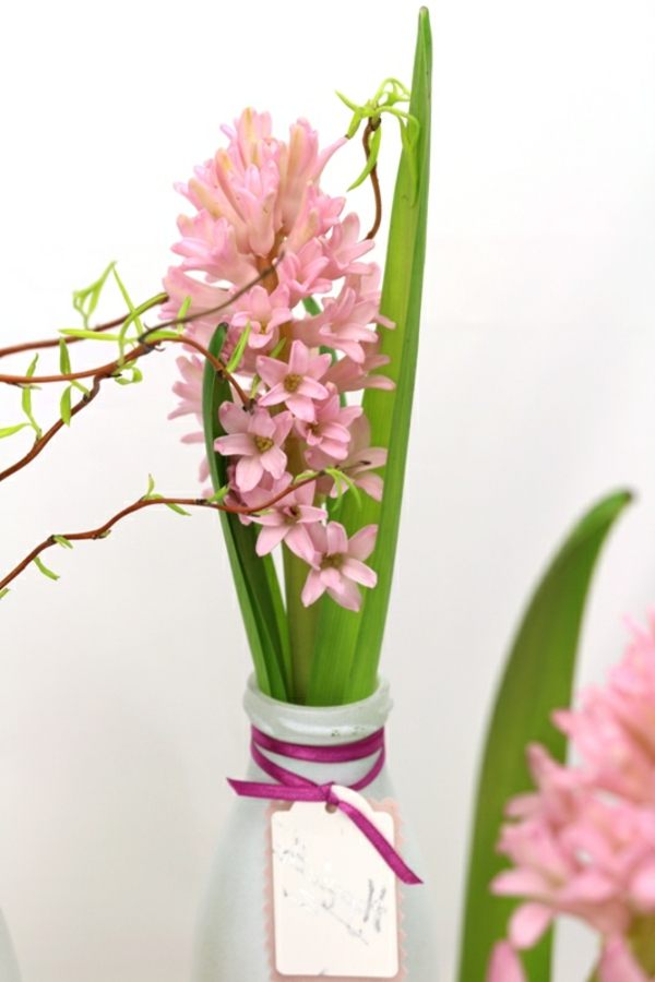 rosa-Hyazinthe-mit-Satinband