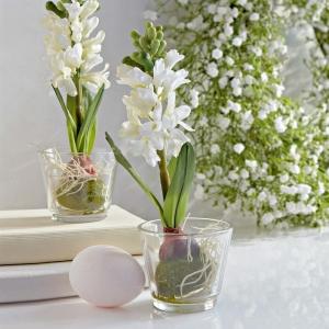 Lass den Frühling rein! Hyazinthen - spektakuläre Dekorationsideen