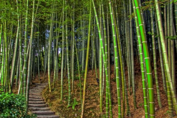 wunderschöner-natürlicher-bambus-garten