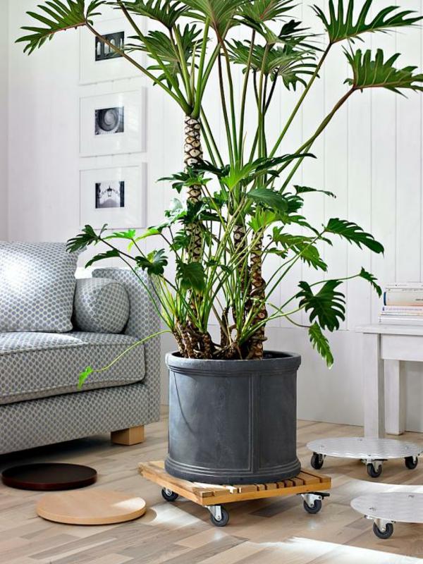 Zimmerpflanzen wohnzimmer for Zimmerpflanzen wohnzimmer