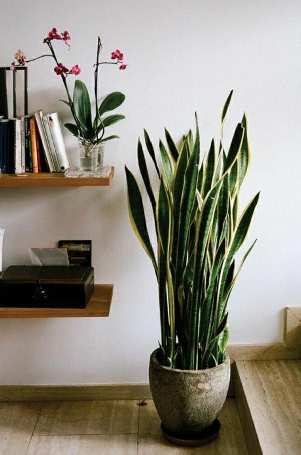 Pot De Fleur : Zimmerpflanzen für das perfekte ambiente im haus