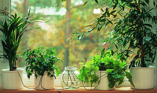 sattgrüne-pflanzungen-am-fenster