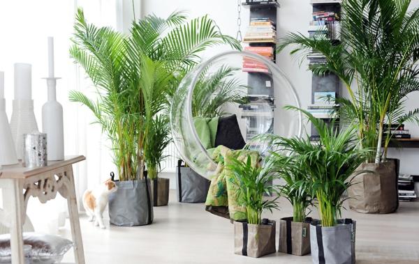 Zimmerpflanzen fur wohnzimmer raum und m beldesign - Esszimmermobel landhausstil ...