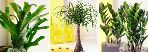 pflanzen-im-raum-