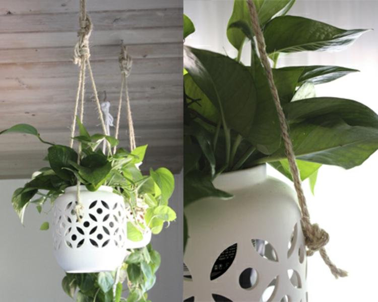 raum-deko-mit-besonders-starken-seilen-schick-edel-modern-alle-möglichen-pflanzen