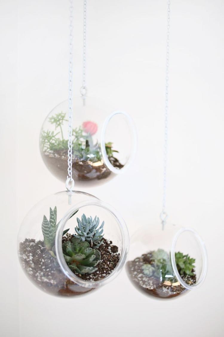 Schön Terrarium Pflanzen Besonders Schick Edel Modern Fein Schlicht