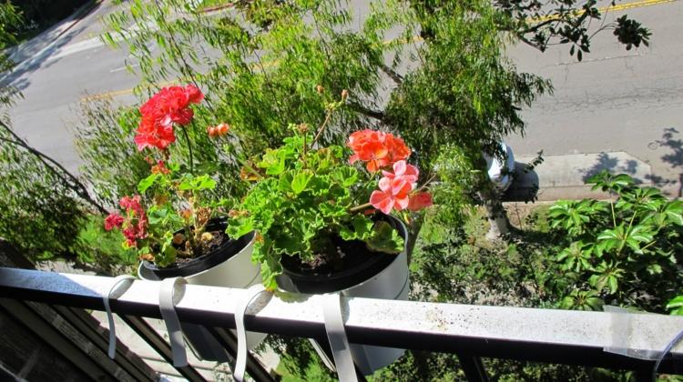 hängende-pflanzen-entlang-balkon-schick-edel-modern-besonders-einzigartig-fein