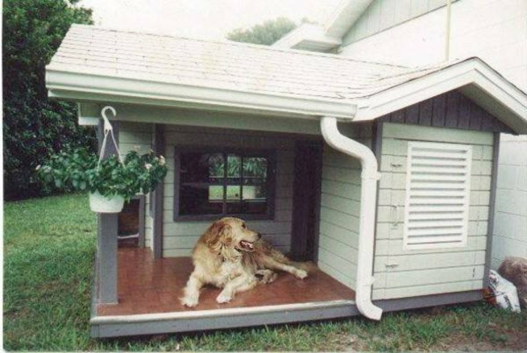 Schlichtes hunde haus edel schick mit veranda edel modern im garten