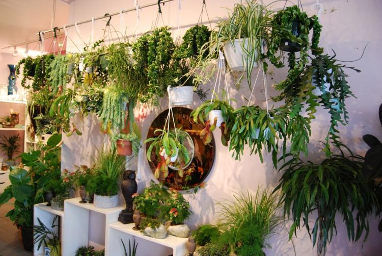 schick-schlicht-besonders-modern-edel-einzigartig-topf-pflanzen-kontrast-reich