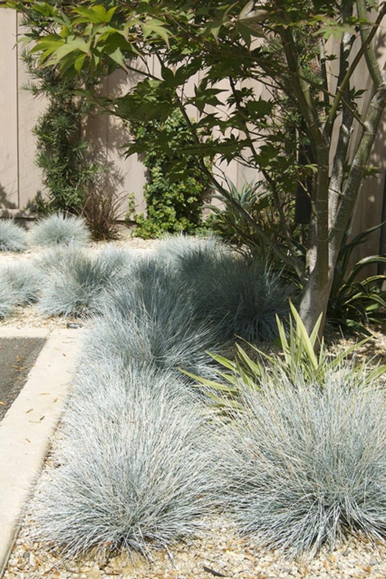 Garten Gräser gräser garten verzaubernd und entzückend für besondere augenblicke