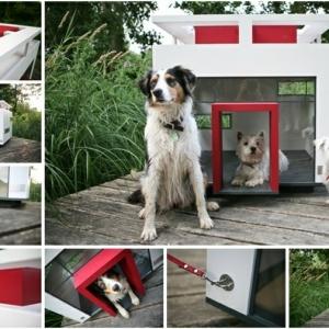 Hundehaus - die skurrilsten Beispiele die es gibt!