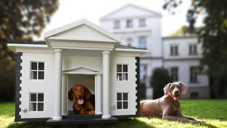 hunde-haus-nach-geschmack-der-architektur-im-hintergrund-besonders-schick-edel