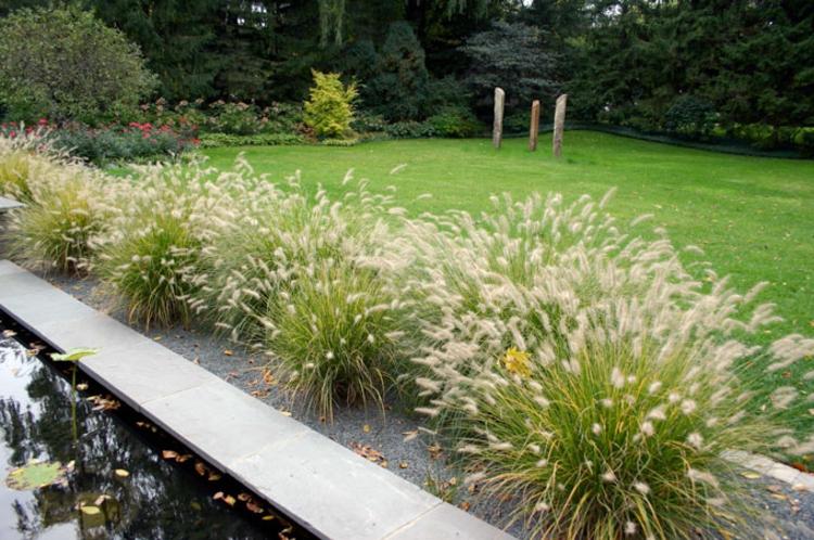 Gräser Für Garten gräser garten verzaubernd und entzückend für besondere augenblicke