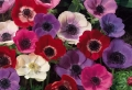 Frühlingsblumen – 100 faszinierende Bilder !