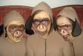 Affe Schminken: für kleine und große Kinder!
