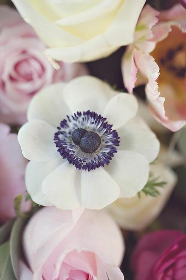 anemonen-weiß-rosa-tulpen--