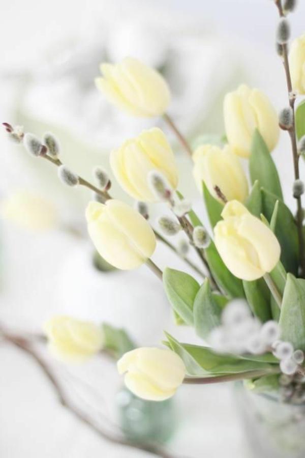 bilder-tulpen-pflanzen-die-tulpe-tulpen-aus-amsterdam-tulpen-bilder-tulpen-kaufen-