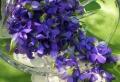Das Veilchen – duftende Schönheit in Lila!