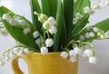 Maiglöckchen – eine beliebte Frühlingsblume!
