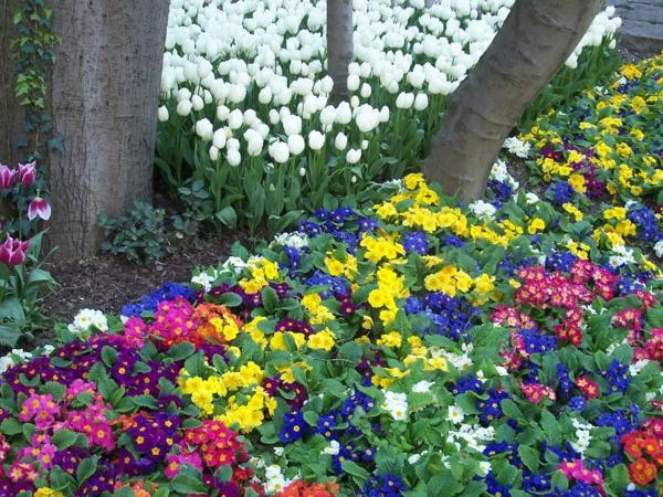 blumen--tulpen-pflanzen-die-tulpe-tulpen
