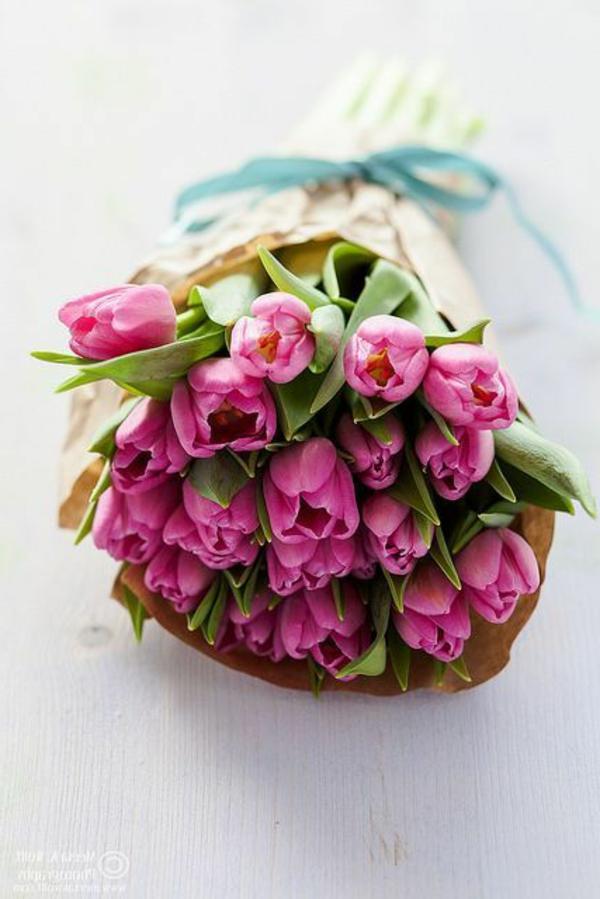 blumendeko-bilder-tulpen-pflanzen-die-tulpe-tulpen-aus-amsterdam-tulpen-bilder-tulpen-kaufen