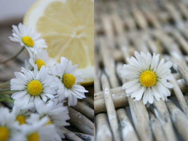 frühlingsblumen-blumendeko-gartengestaltung-garten-gestalten-wunderschöne-weiße-blumen- gänseblümchen