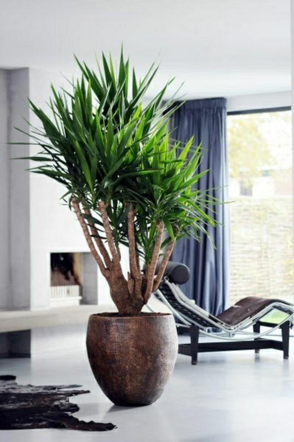 yucca palme 26 fantastische bilder zur inspiration. Black Bedroom Furniture Sets. Home Design Ideas