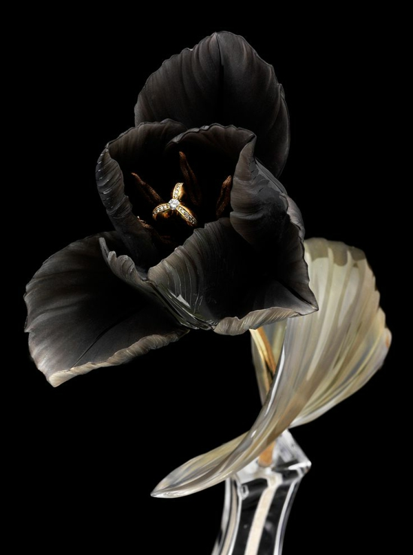 extravagantes-foto-von-einer-schwarzen-tulpe
