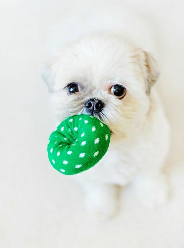 fantastische-hundespielzeuge-ball-zum-spielen- --spielzeug-für-hunde