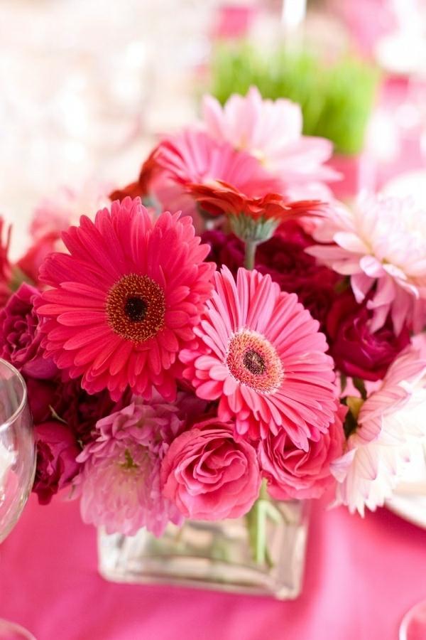 fantastische-schnittblumen-zimmerpflanzen-gerbera-mehrere-farben-blumen-für-zuhause