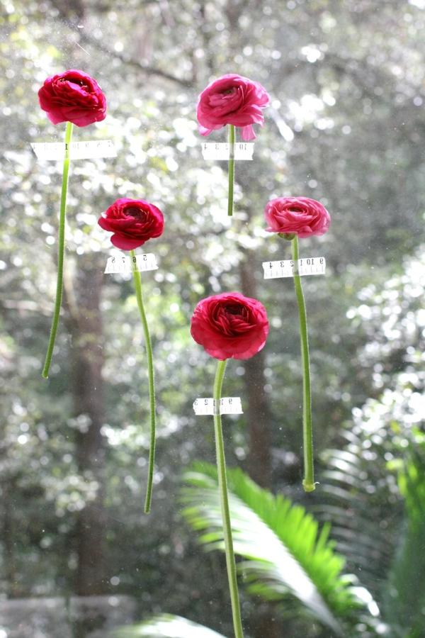 fensterdeko-frühling-angeklebte-rote-blumen- ein sehr schönes bild